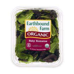 Earthbound Organic Baby Romaine