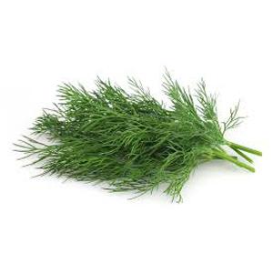 Dill - Fresh Organic
