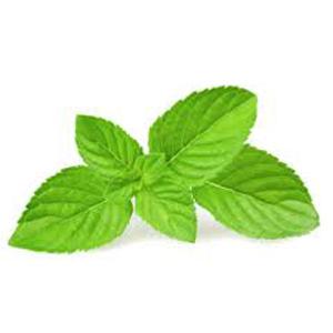 Mint - Fresh Organic