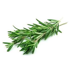 Rosemary - Fresh Organic