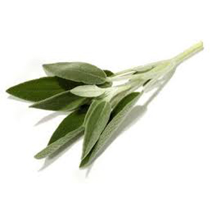 Sage - Fresh Organic