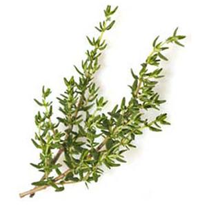 Thyme - Fresh Organic